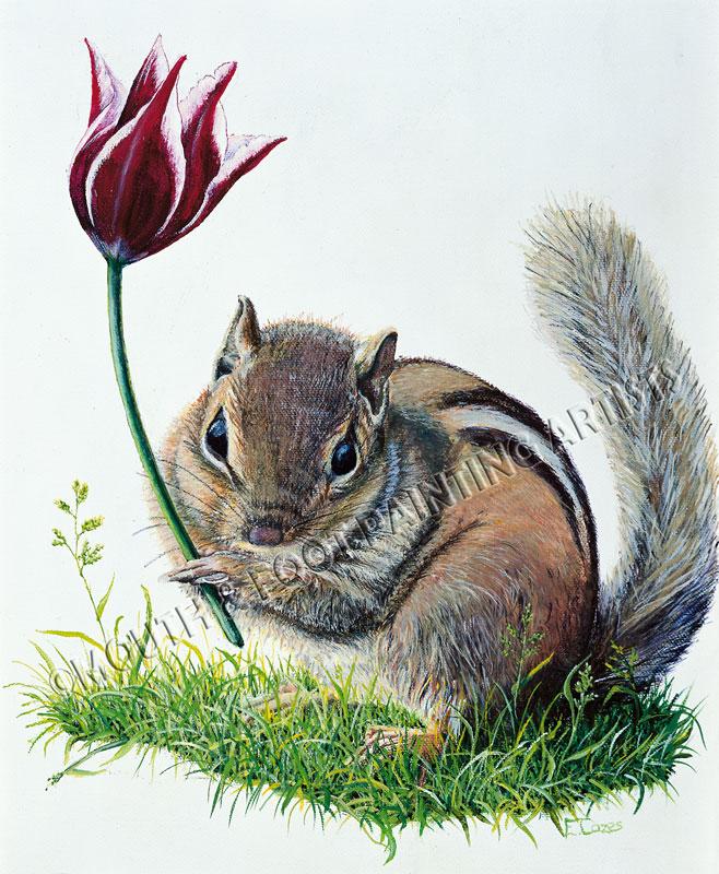Squirrel & The Lotus