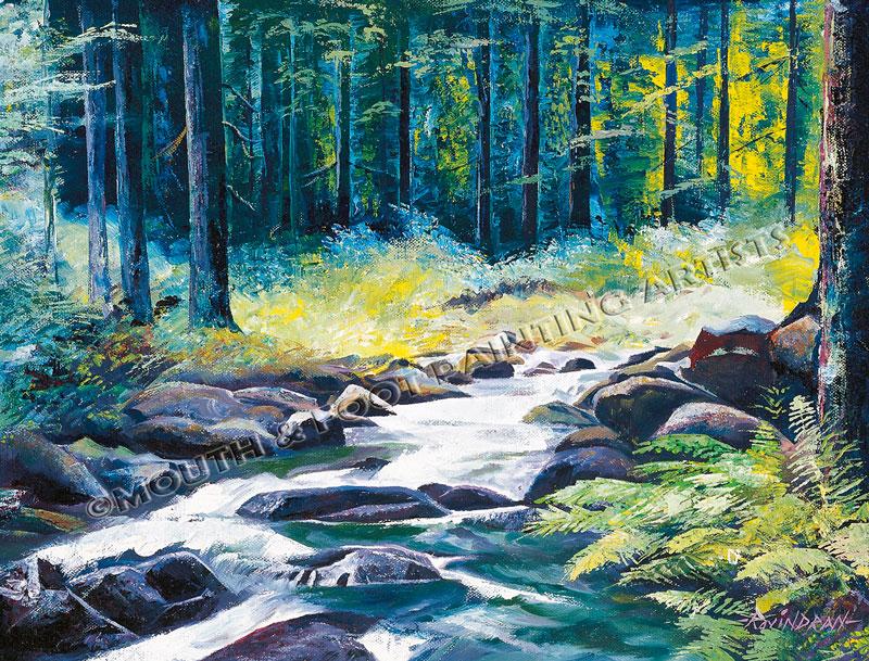 Coniferous forest & brook