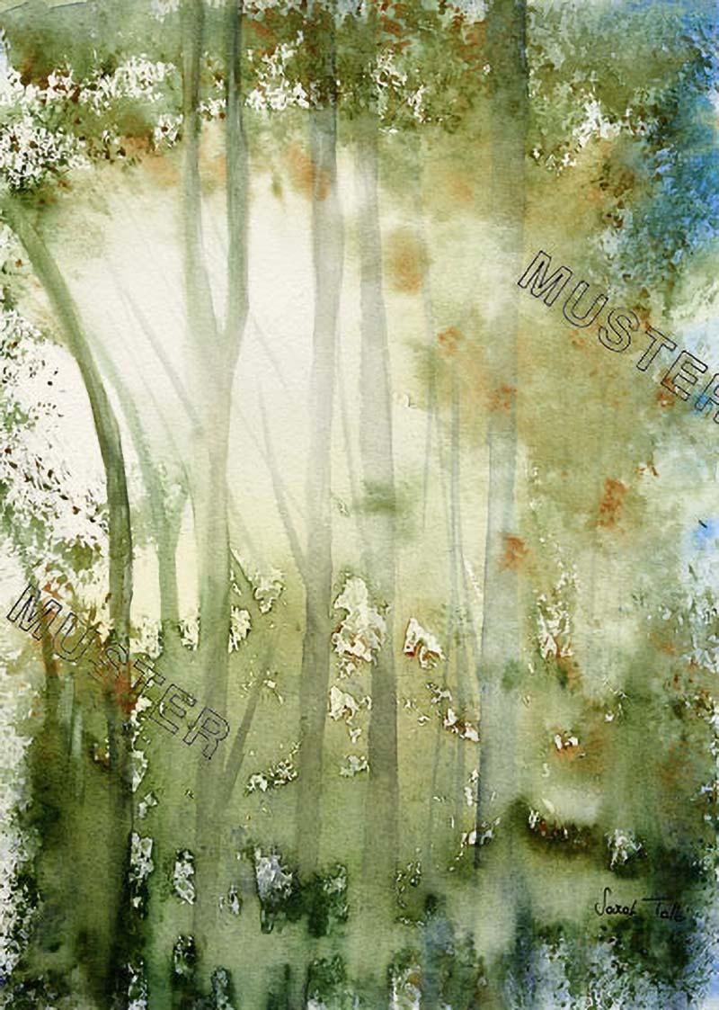 Soleil sous les branches