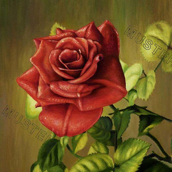 Czerwona roza